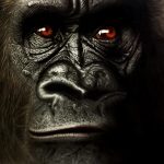 Wild Kong dibujo aerografia