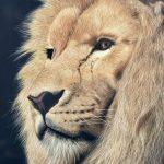 Lion's pride obra de aerografía