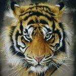 Tiger's fury obra del artista césar deferrari